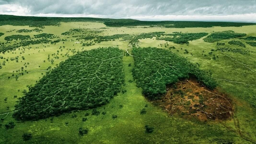 A Floresta Amazônica é o Pulmão do mundo?